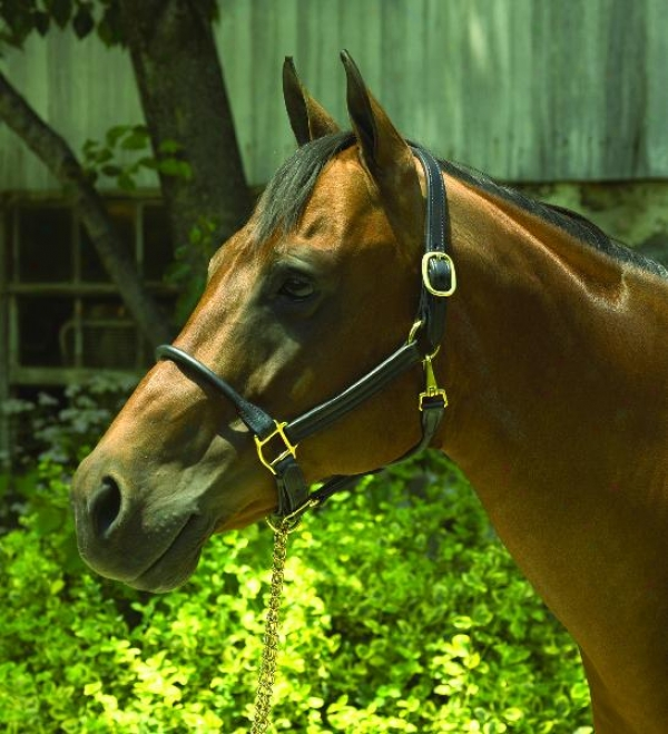 Perri's Rolled Nose 1 Leather Halter
