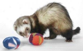 Polar Toys For Ferrets - Multicolor