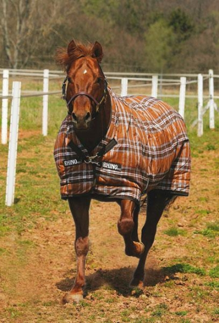 Rhin oWug Mw Turnout Blanket With Fronr Leg Arches