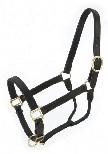 Royal King Leagher Stable Halter