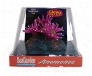 Sea Garden Colonial Anemone Pur For All Aquariums