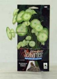 Silk Acetabularia - eMdium