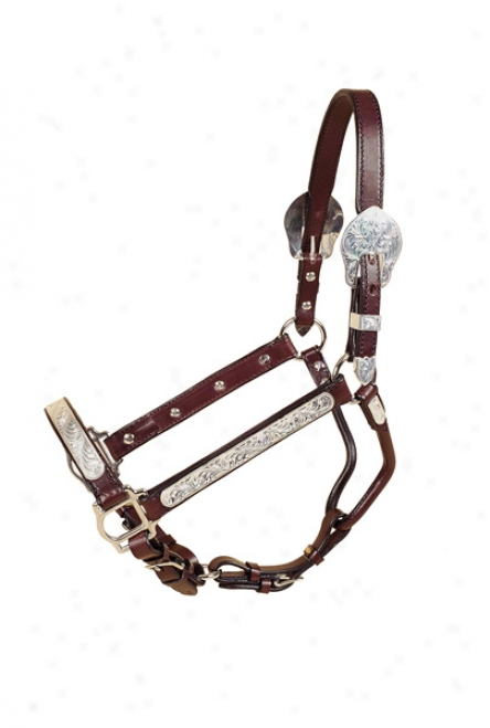Tory Leather 1 Show Halter, Rochester Plate With Lead