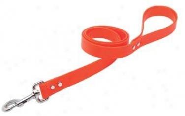 Weaver Carefree Select Dog Leash - Blaze Orange