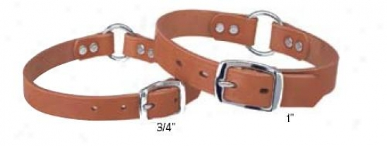 Weaver Hunt And Sport Select Leather Collar