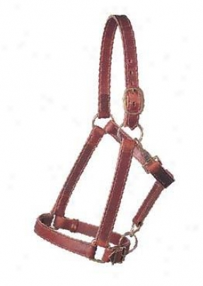 Weaver Leather Make an outline of Steed Halter