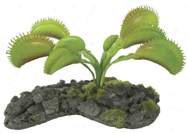 Zilla Tr0pical Series Terrarium Plant - Venus Flytrap - 3